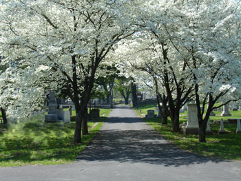 Dogwood trees at the Nashville City Cemetery
