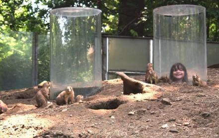 "Prairie dog exhibit with ""pop-up"" viewing areas"