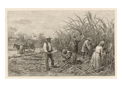 Depiction of sugar plantation workers in Louisiana in the late 1800s