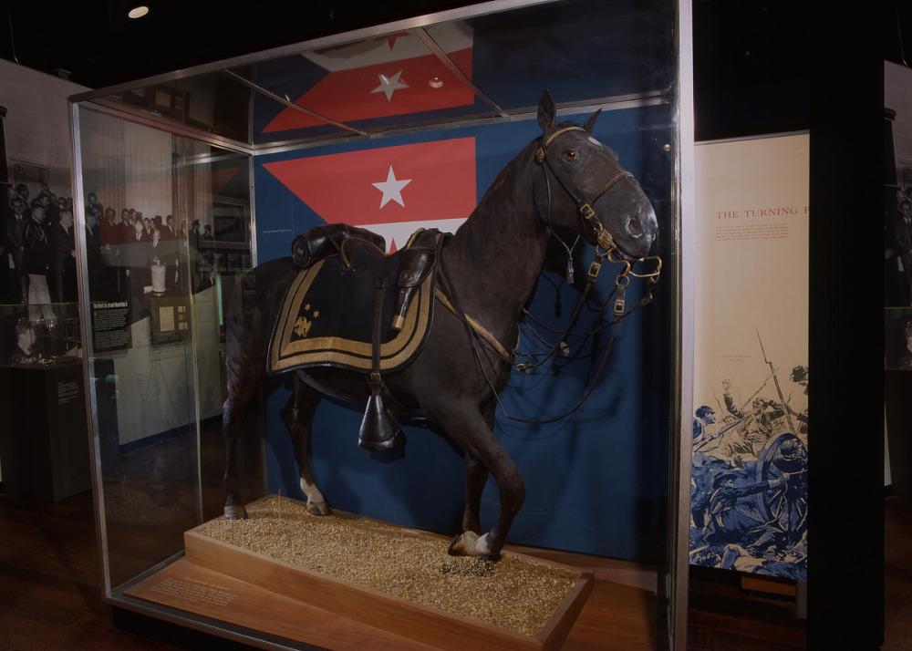 Horse, Art, Display case, Horse supplies