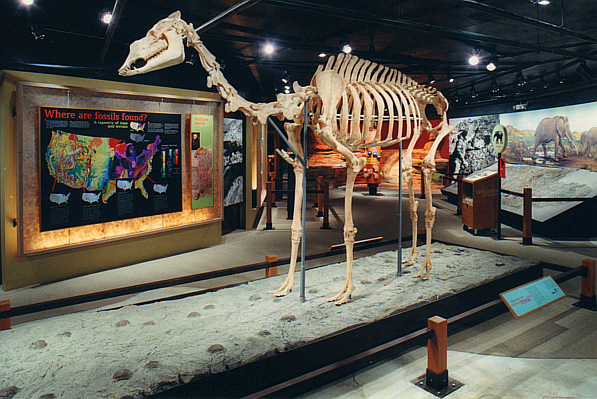 One of many exhibits in the Hall of Footprints