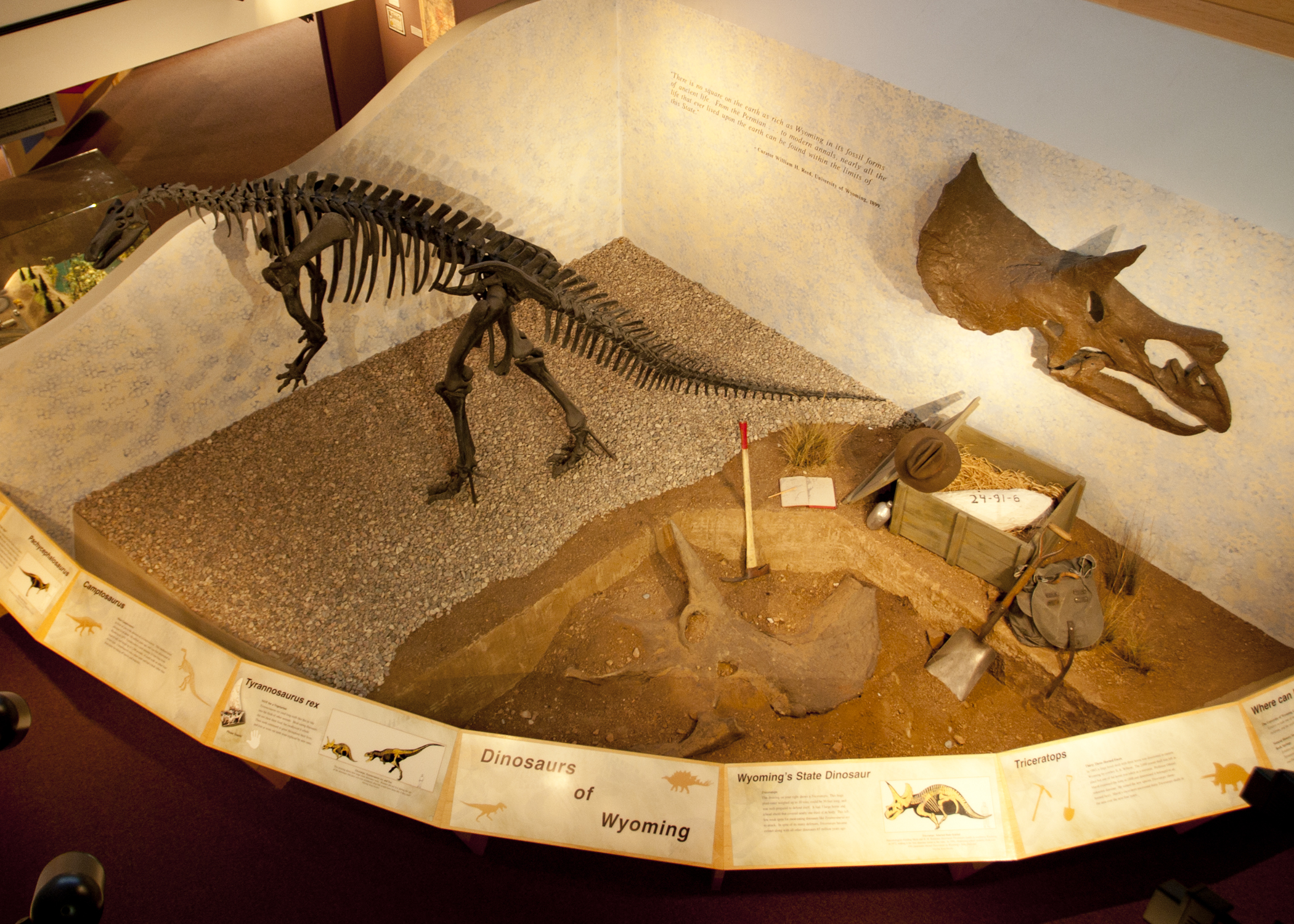 One of the dinosaur exhibits on display at the museum