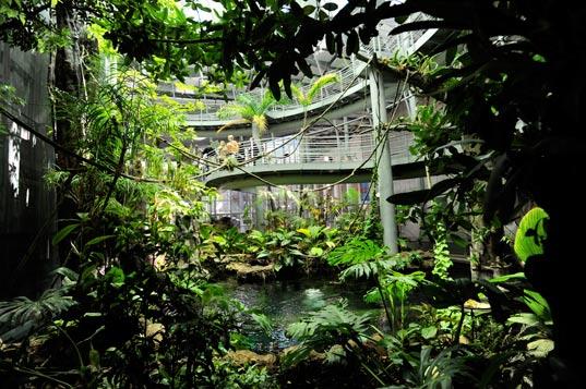 4-story rainforest