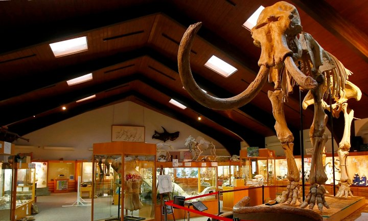 """Dee"" the Mammoth is believed to be the oldest and most complete Columbian Mammoth ever found."