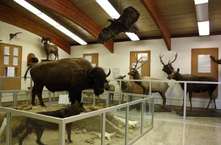 View of some of the animals on display.