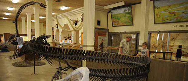 One of the dinosaur skeletons on display at the museum