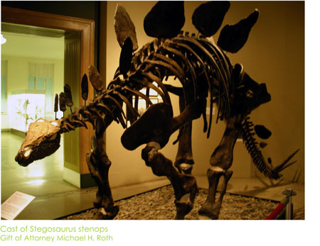 Stegosaurus Display