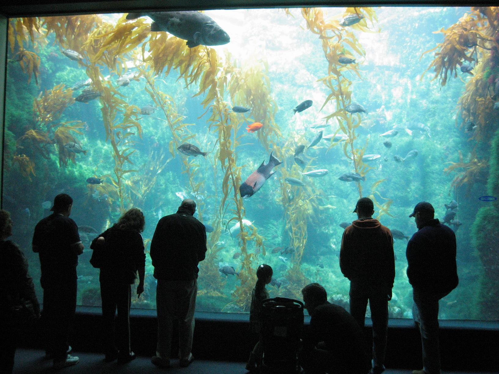 Visitors are able to see 60 ocean habitats and participate in a variety of hands-on activities related to ocean science.