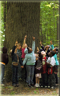 Class of children gathered around a large tree in the Wesselman Woods