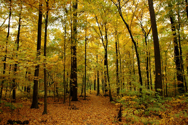 The Wesselman Woods' Main Trail in Autumn