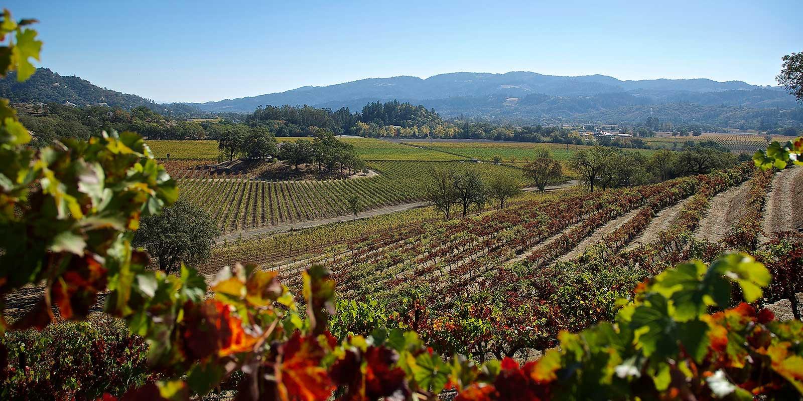 Vineyards at Chateau Montelena Winery