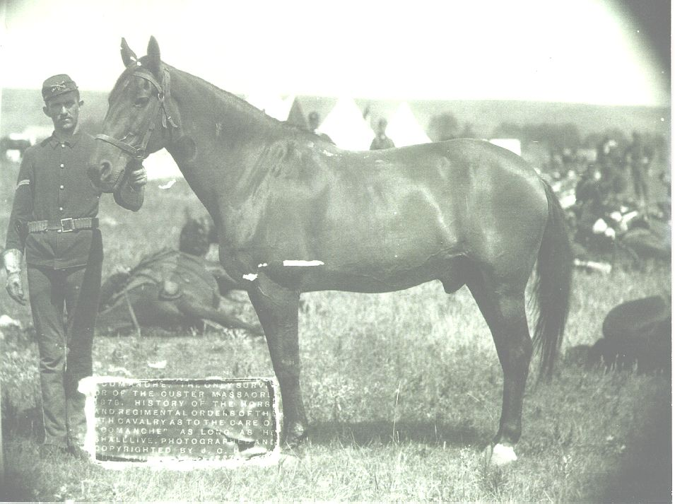 Comache - this horse was the only survivor of 7th Cavalry at the Battle of Little Big Horn