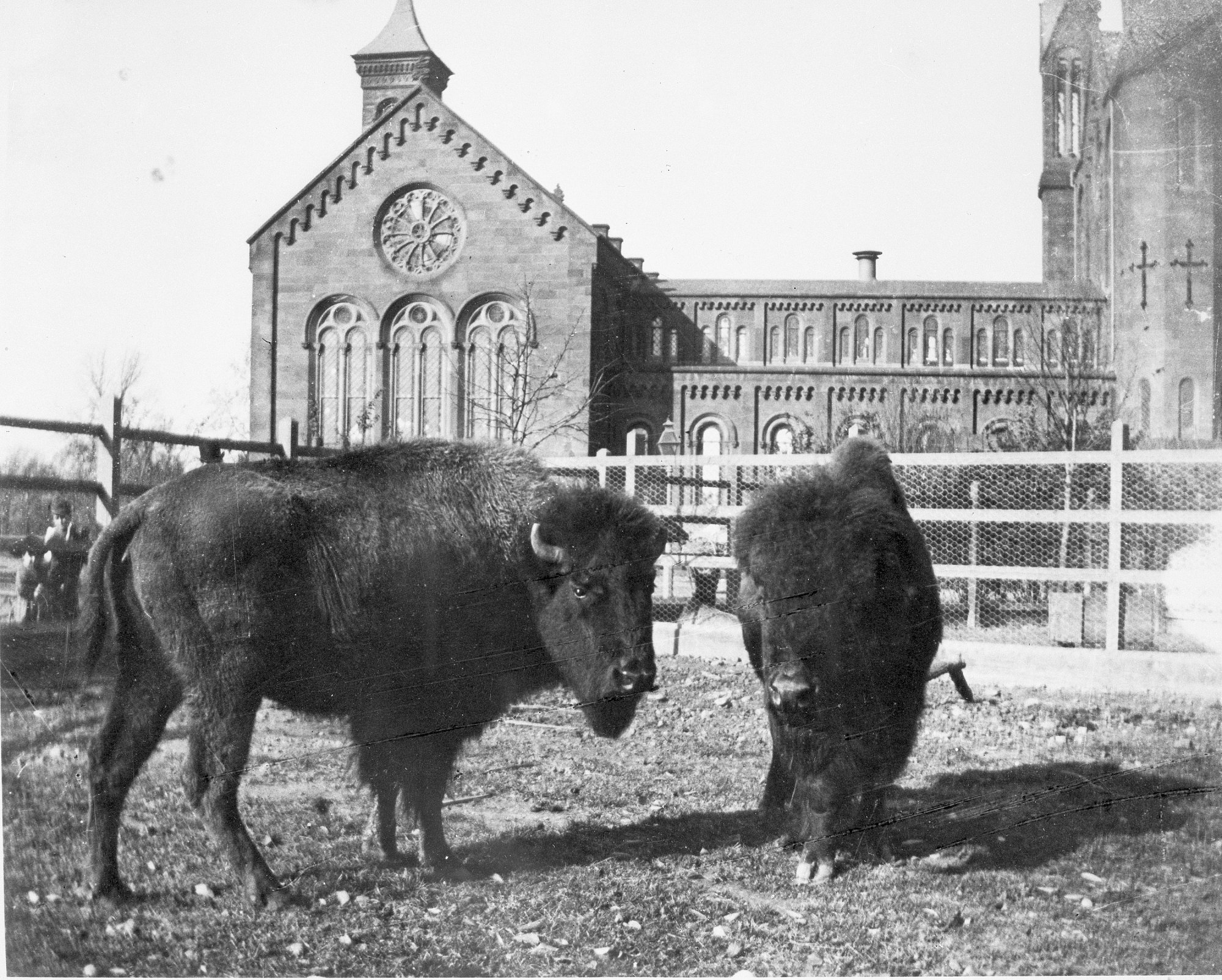 "The first Smithsonian ""exhibits"" of living animals were located in the Castle's backyard. Photo circa 1880s, courtesy of the Smithsonian Institution Archives."