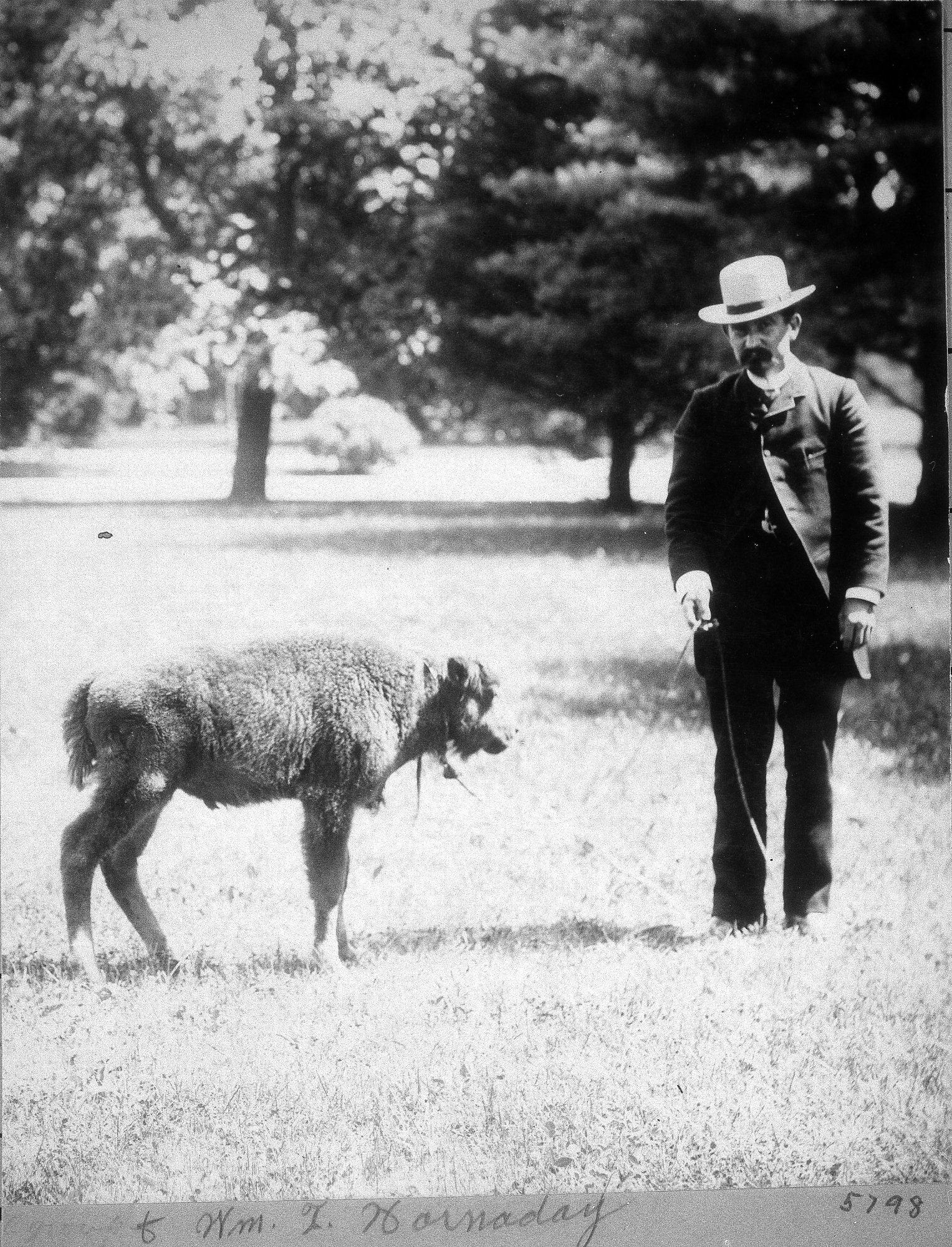 William T. Hornaday was inspired to found the National Zoo when he realized that western settlers were driving the American bison to extinction. Photo circa 1880s, courtesy of the Smithsonian Institution Archives.