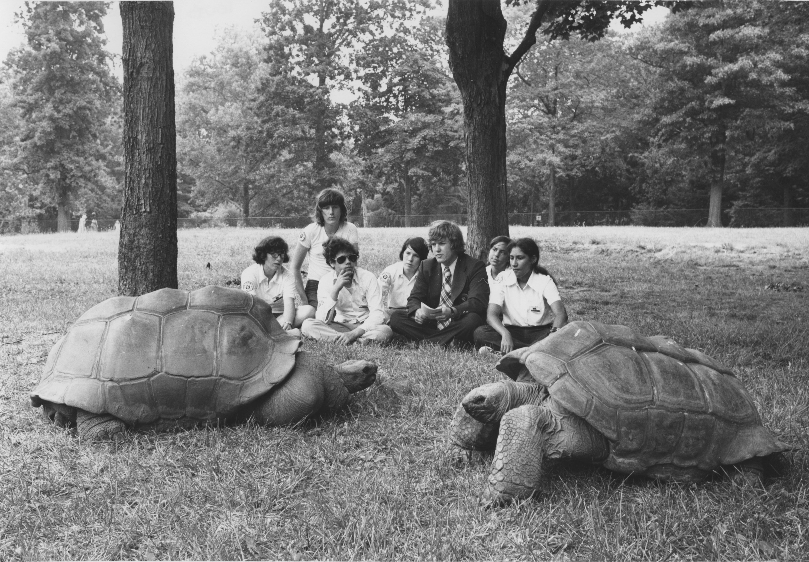 Visitors get quite an up-close look at the zoo's tortoises. Photo courtesy of the Smithsonian Institution Archives.