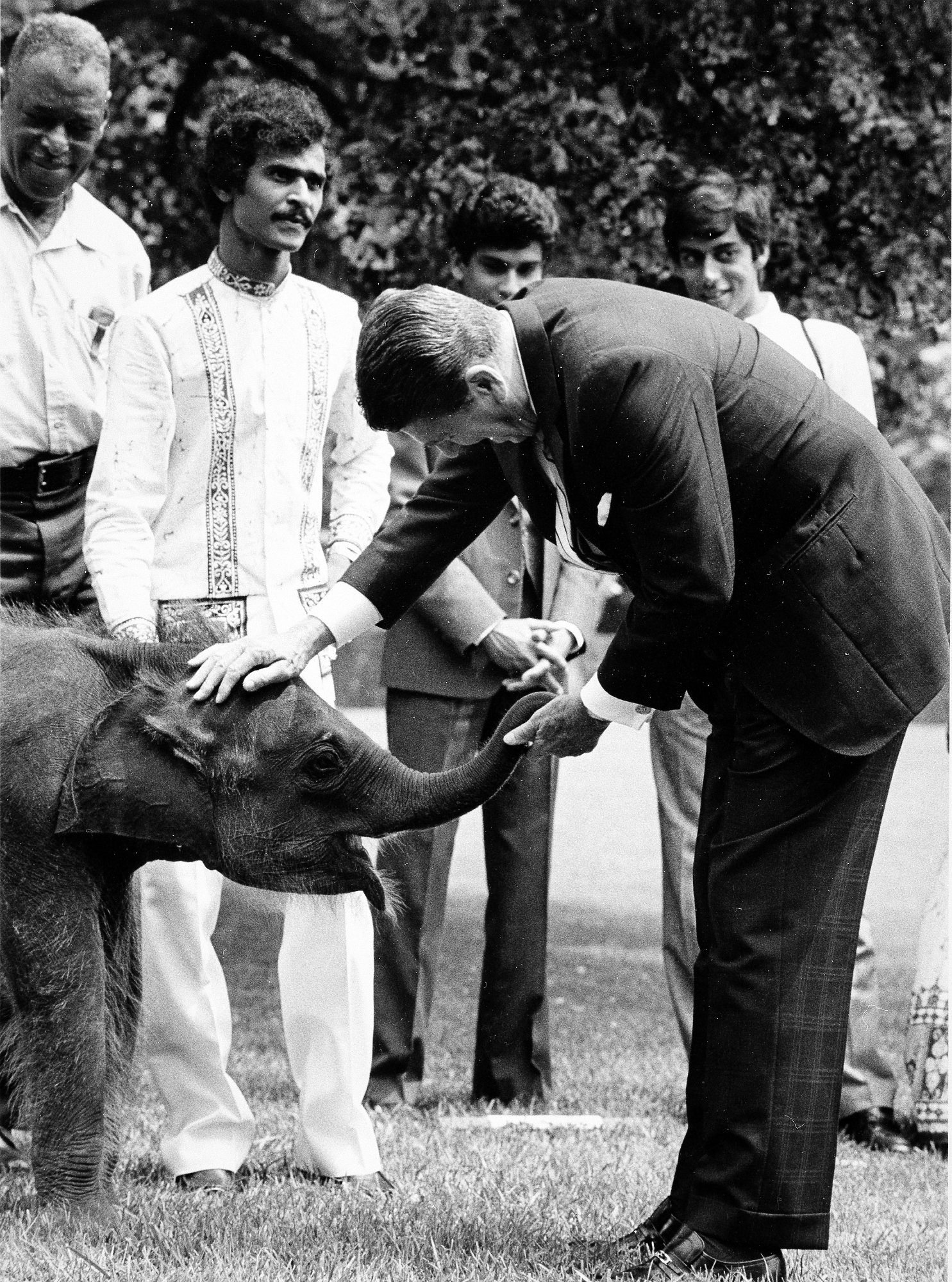 President Ronald Reagan welcomes young elephant Jayathu to the National Zoo from Sri Lanka. Photo circa 1984, courtesy of the Smithsonian Institution Archives