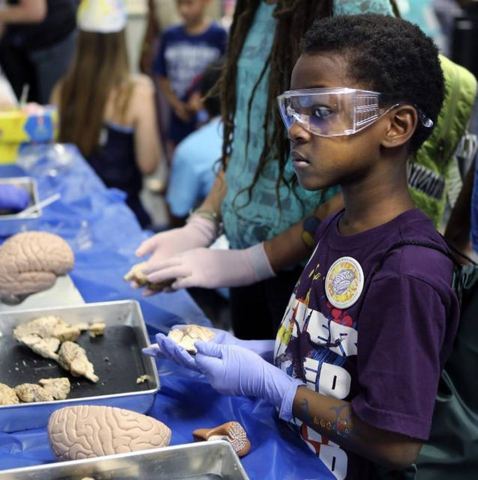 Boy Dissecting a Sheep's Brain During Brain Day at the Patricia and Phillip Frost Museum of Science