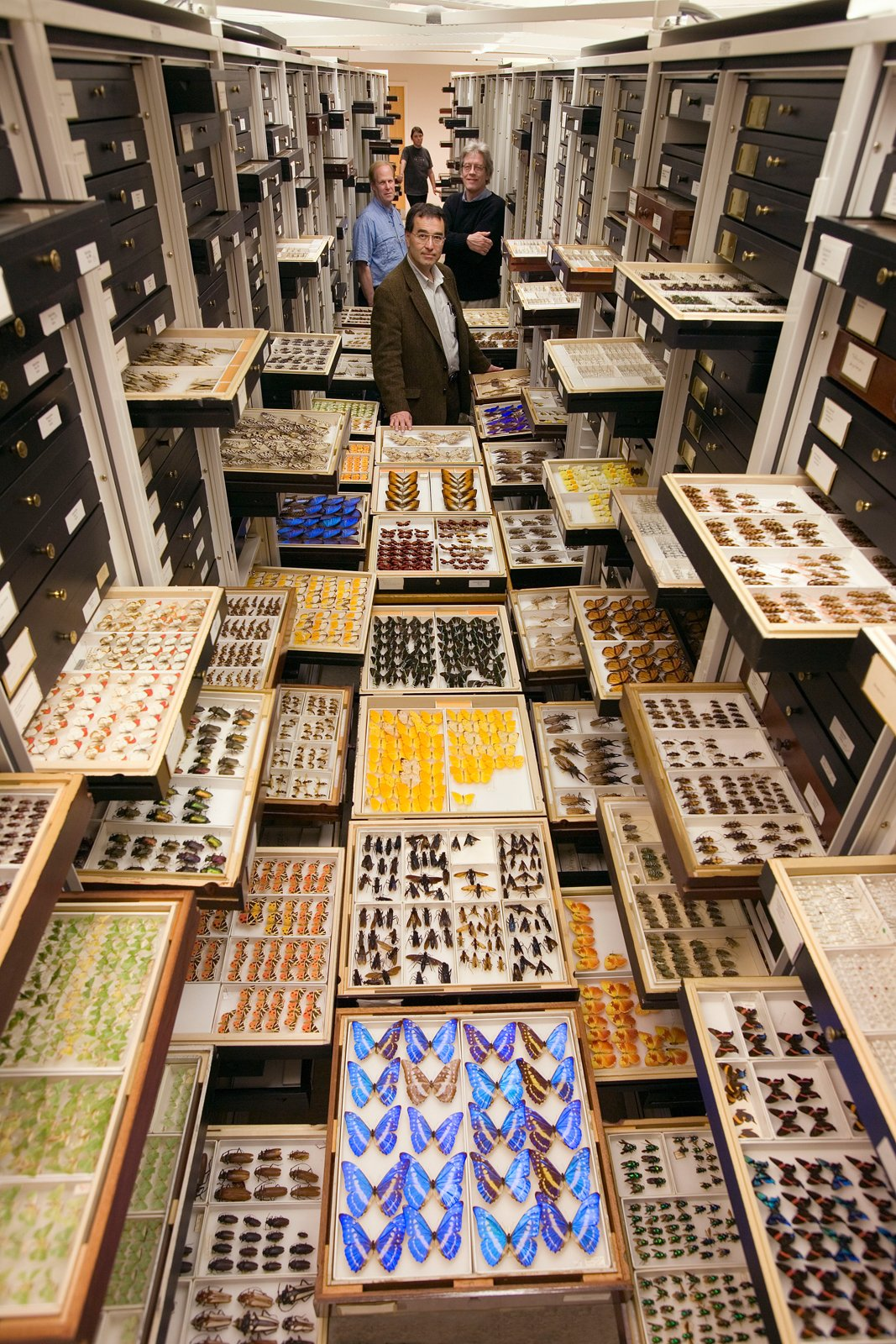 Entomology staff stand among millions of insects in the Smithsonian collection. Photo by Chip Clark.