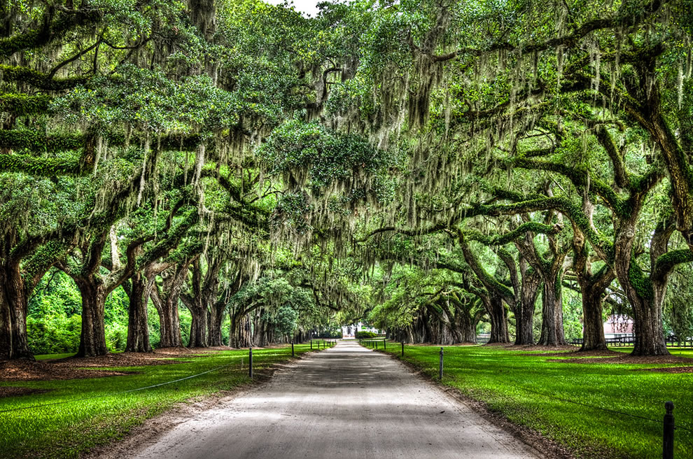Boone Hall Plantation Avenue of Oaks
