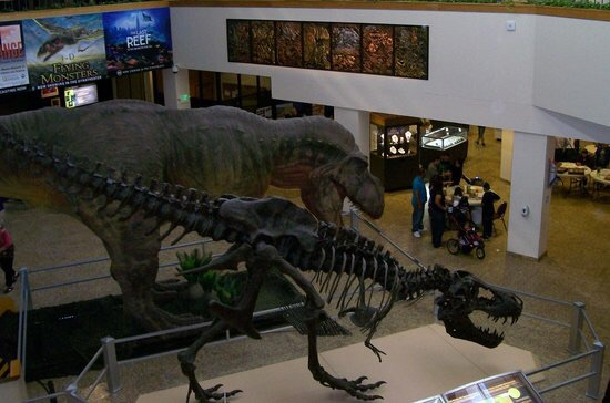 The museum features numerous skeletons, fossils, and other specimens on display.