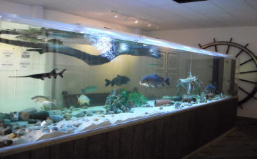 The museum is home to a large aquarium with species from the Ohio River.