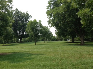 The Pecan Grove was planted in the early 20th Century to help diversify the crops grown at Oak View.