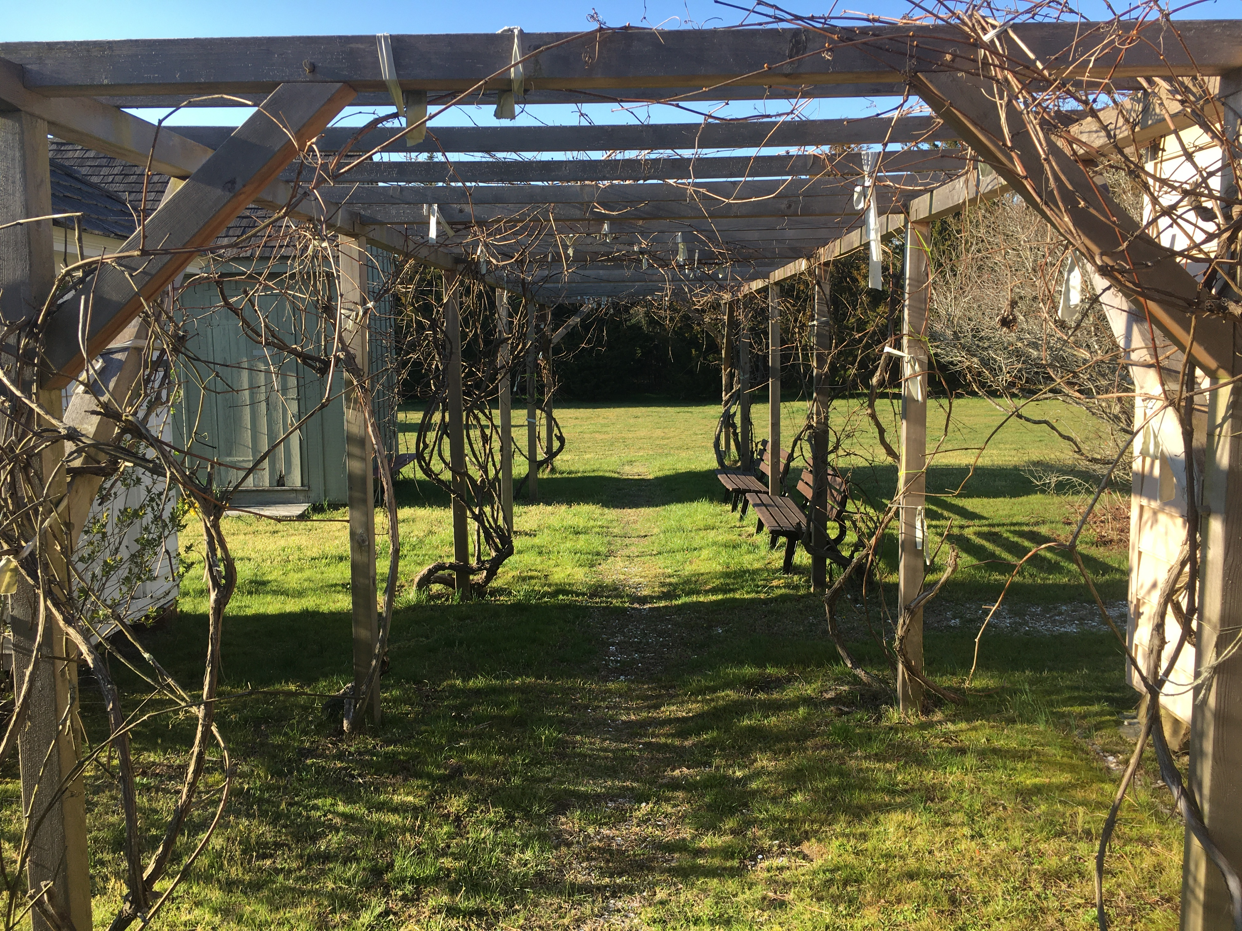 Gandy Farmstead - Grape Arbor