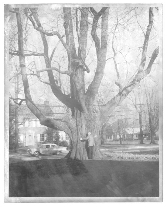 Black and white photograph of Dr. Rash standing in front of the world's largest sassafras tree, ca. 1964