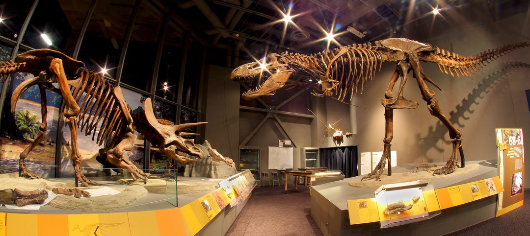 The T-Rex and Triceratops skeletons on display in the Adaptation gallery.