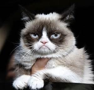 "Tarder Sauce ""Grumpy Cat"""