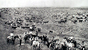 Cattle drive up the Chisholm Trail