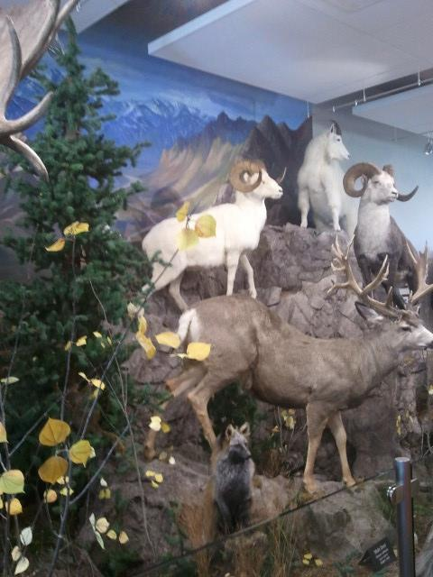 The museum includes a variety of displays that highlight the biodiversity of the region.