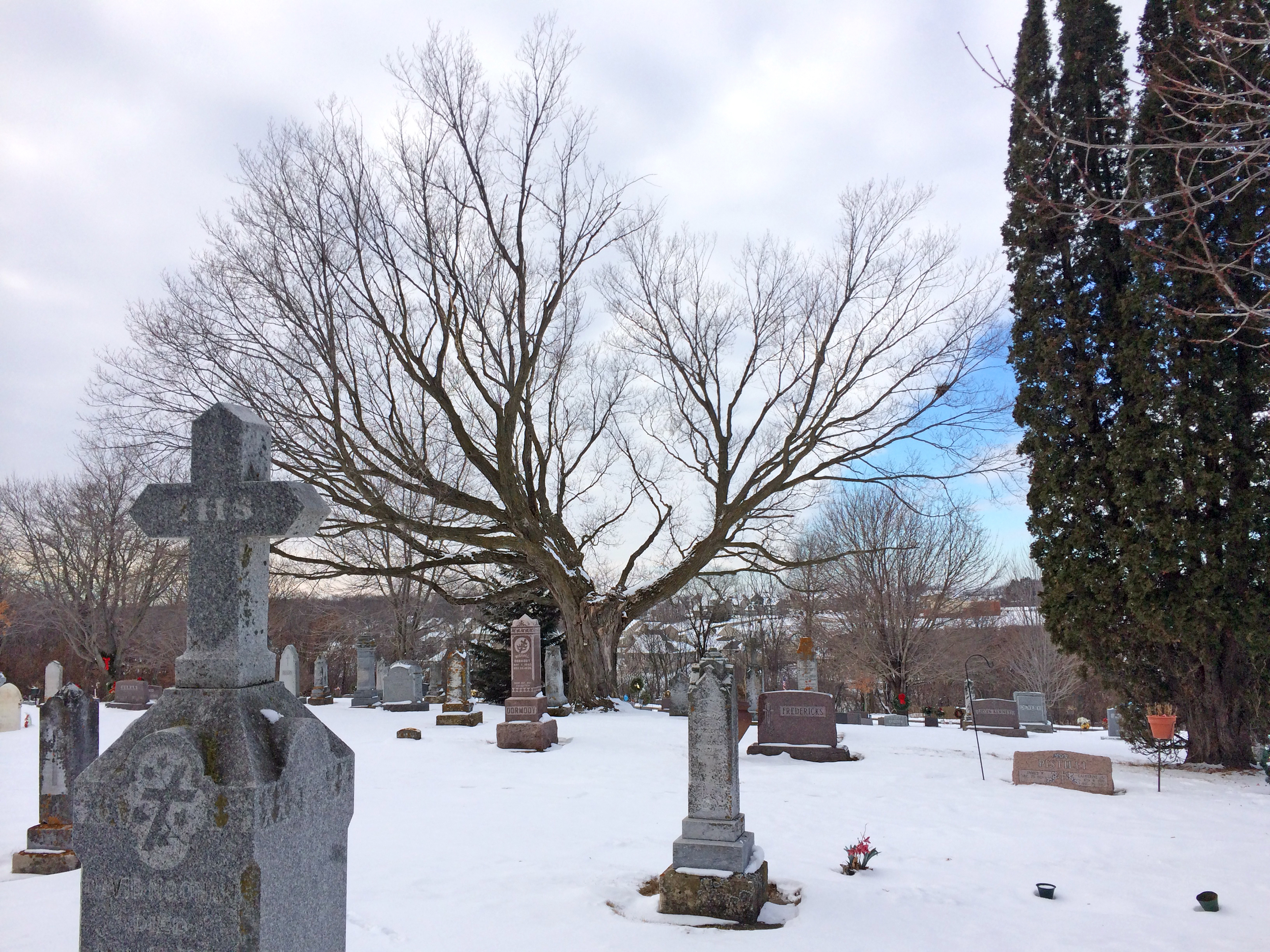 The cemetery is centered around a tree known as the Annie Donahue Maple.