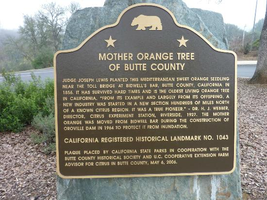 "Historical marker: ""From its example and largely from its offspring, a new industry was started in a new section hundreds of miles north of a known citrus region.  It was a true Pioneer."" – Dr. H. J. Webber, Director, Citrus Experiment Station, River"