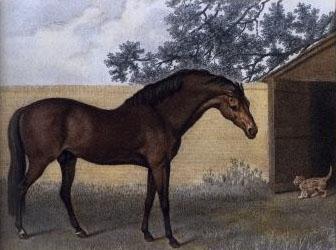 Godolphian Arabian