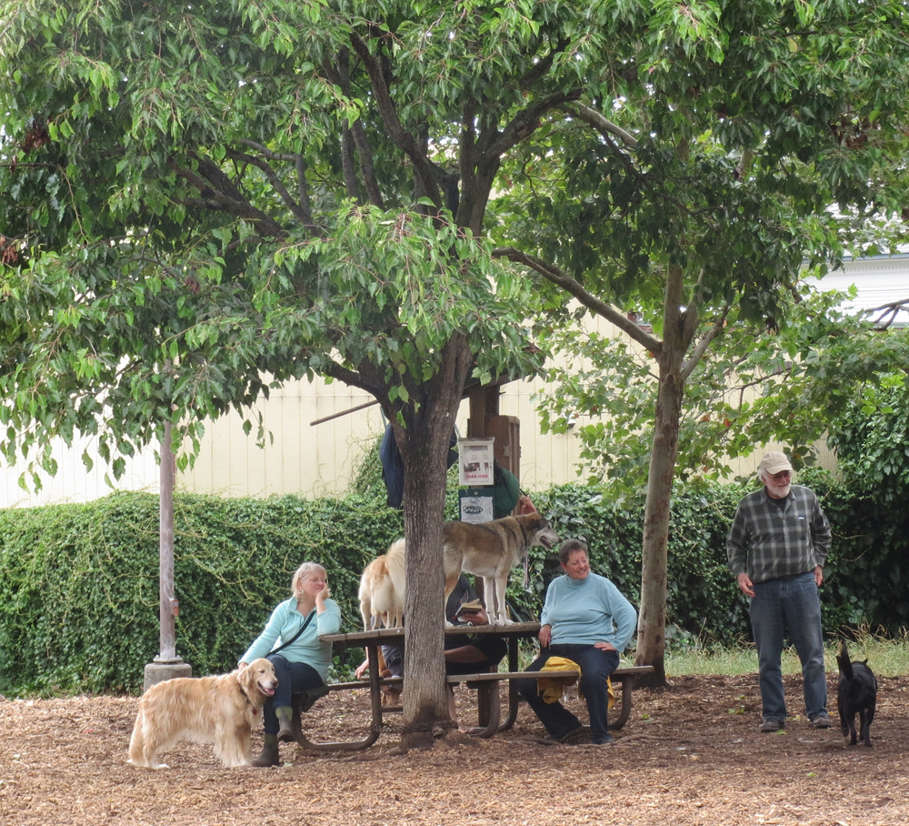 """The Ohlone Dog Park in Ohlone Park (previously the """"People's Park Annex"""")"""