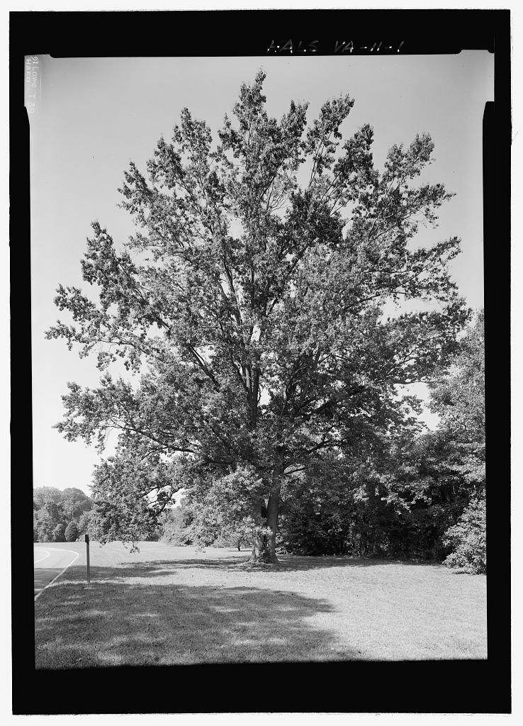 Royal Visit Pin Oak, by Jet Lowe for HALS, via Library of Congress (no known copyright restricitons)