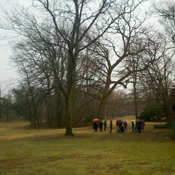 Awbury trees