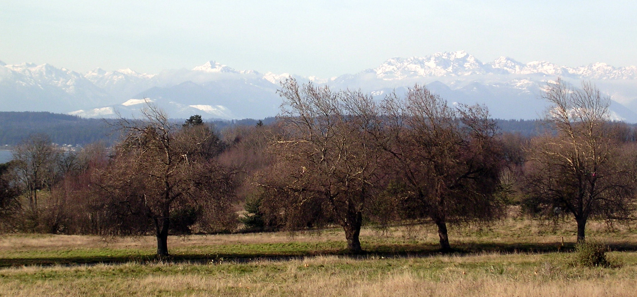 Olympic Mountain Range from Discovery Park