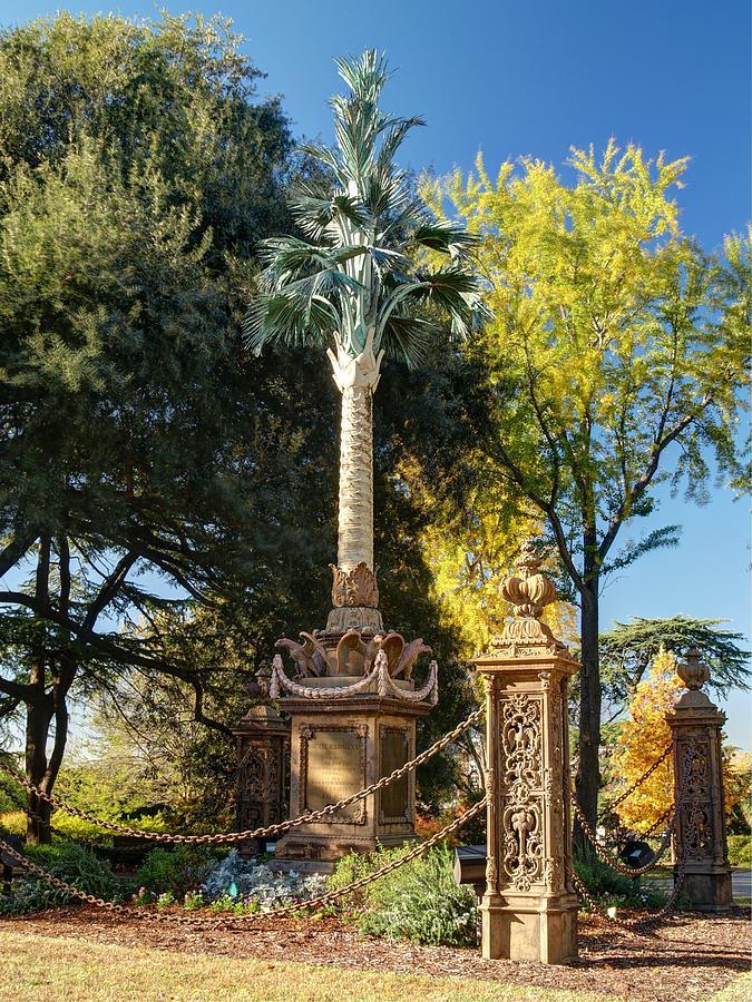 Tree, Landmark, Cross, Woody plant