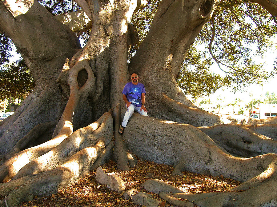 The person in the image provides scale to the tree's root system.