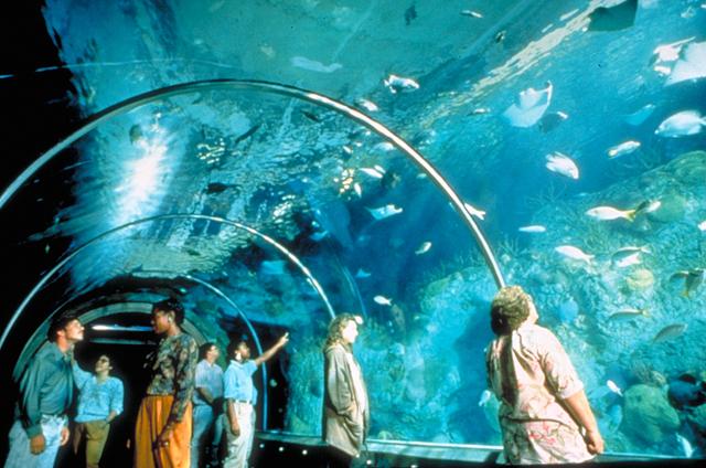 """""""Underwater tunnel"""" in aquarium"""