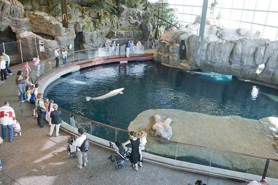 One of the many exhibits within aquarium
