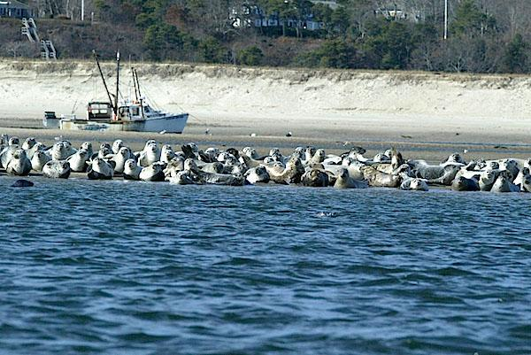 Photo courtesy of Meghann Murray, NEFSC/NOAA.