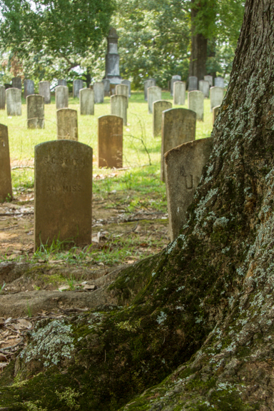 Famous Headstone in a tree