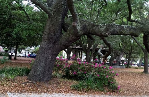 Seville Square sits under gorgeous oak trees.