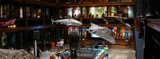 Inside of the Bernice Pauahi Bishop Museum