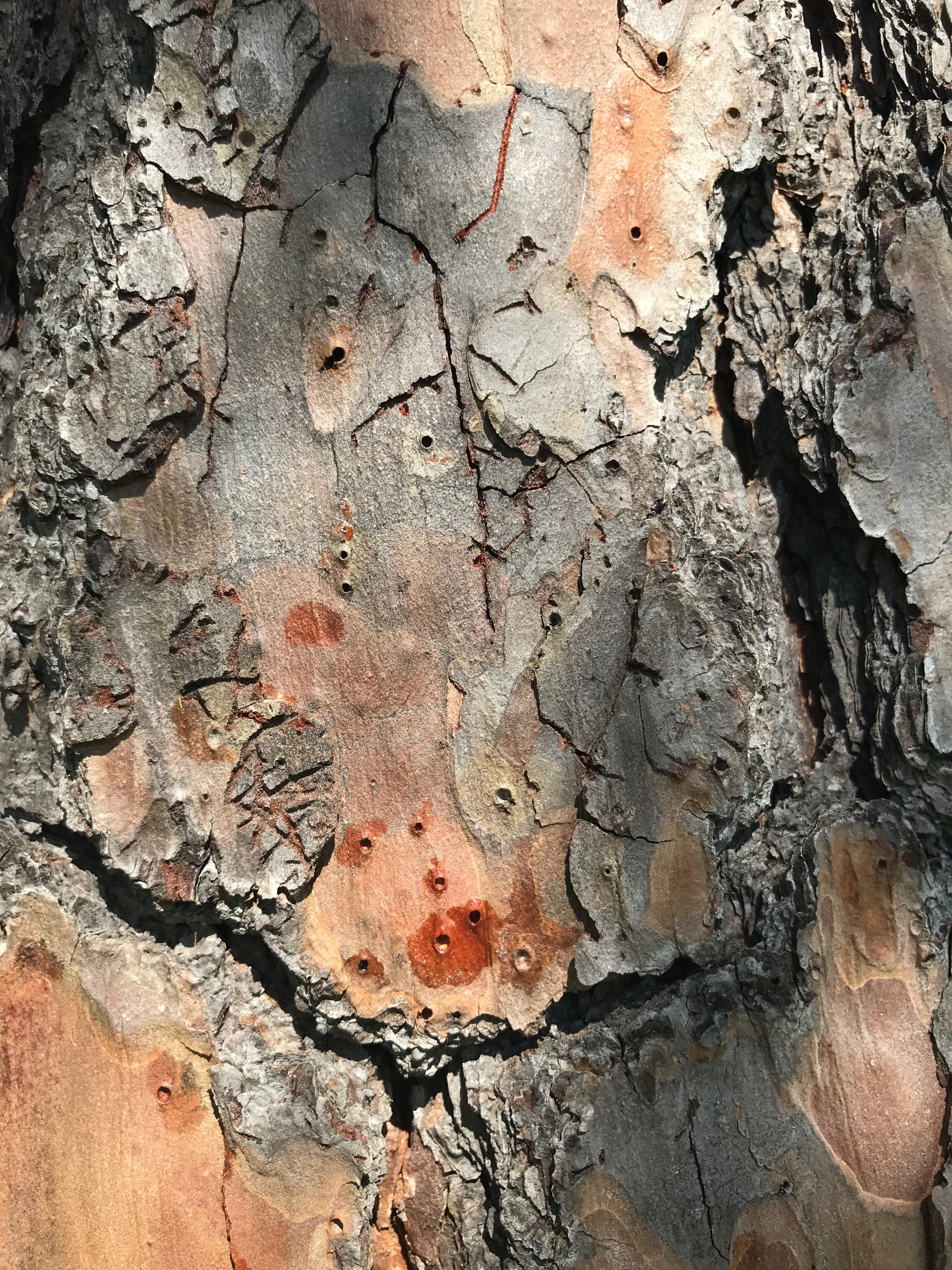 Brown, Wood, Organism, Trunk