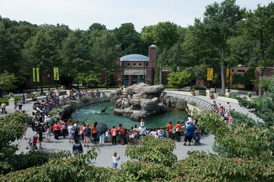 The Prospect Park Zoo has had a long history in Brooklyn full of ups and downs. It is currently part of a group of New York City zoos managed by the Wildlife Conservation Society.