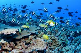 The monument features coral reefs, shallow waters and abundant marine life.